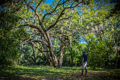 Chillin among the Big Oaks... (tshabazzphotography) Tags: selfie jacksonville canonphotos canonofficial nature oaktree exploring cameo green orangetrees oranges fruit