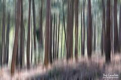 Motion blur (Toucaly) Tags: wood en france forest landscape outside la spring europe sunny paysage extrieur printemps fort hez picardie underwood directional undergrowth sousbois oise neuville ensoleill 500px laneuvilleenhez directionnel ifttt