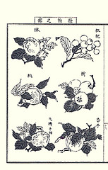 Chinese quince, loquat, peach, Japanese persimmon, unknown fruit and apricot (Japanese Flower and Bird Art) Tags: flower art japan japanese book chinese picture peach apricot persimmon loquat japonica quince nihonga kaki prunus intaglio chaenomeles rosaceae diospyros eriobotrya speciosa armeniaca persica yasujiro ebenaceae matama readercollection