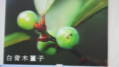 DSC07622 (yongheecs永和社大生態保育社) Tags: 林場