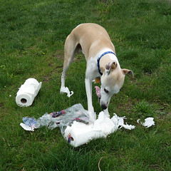 Tongue Malfunction (DiamondBonz) Tags: dog pet tongue paper hound whippet spanky