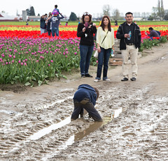 Playing in the mud 1 (Getting Better Shots) Tags: flowers flora mud skagit tulipfestival