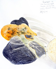 Pencil and watercolour drawing of rocks on the beach from our Sooke sketching trip on Vancouver Island (elizabatz.jensen) Tags: rocks vancouverisland rockformations