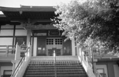 160429_CanonetGIII_029 (Matsui Hiroyuki) Tags: fujifilmneopan100acros canoncanonetgiiiql1740mmf17 epsongtx8203200dpi