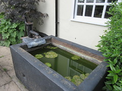 27/5/2016, 148/365, Water trough IMG_8290 (tomylees) Tags: project may 365 friday essex 27th braintree 2016 fowlersfarm