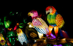 _DSC9689_2 (Elii D.) Tags: light fish flower animal night zoo monkey neon dragons lantern lampion dargon
