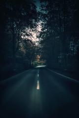 # Escape far away ..... (Fan.D & Dav.C Photgraphy) Tags: road trees nature fog forest landscape colorphotography naturephotography treesphotography