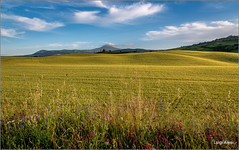Val d'Orcia (Luigi Alesi) Tags: italy landscape countryside nikon scenery italia raw country natura unesco d750 siena toscana valdorcia paesaggio patrimonio dellumanit