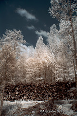Bienne_DSC7896 (achrntatrps) Tags: trees light luz forest ir licht nikon arboles photographer suisse lumire arbres bern wald berne fort biel photographe baume bienne forst hoyar72 lachauxdefonds 720nm infrarouges d5300 dellolivo alexandredellolivo