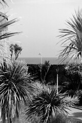 Eastbourne04_20160608 (Animalcito) Tags: delta 11 eastbourne 100 ricoh xtol rikenon kr10x 3570mm3445
