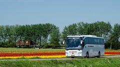 [NL]BV-VZ-25 - Mercedes Benz Tourismo RHD O350 (2009) (DC's transport collection) Tags: netherlands mercedes benz tulips tulip nl tourismo rhd lisse o350 bvvz25 kenkeuhof