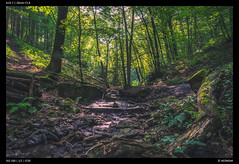 Forest Stream (Falcdragon) Tags: water stream rgionwallonne lige sarttilman sonya7alpha ilce7 sonyamount20mmf28 long exposure forest woods woodland trees moss green