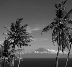 the breeze (4tun8bug) Tags: shadows bright sunny panasonicdmclx100 mountain volcano coconuttrees breeze sway outdoor blackandwhite monochrome ocean sea sky clouds wind lombok indonesia