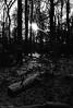 wintery forest in black and white (McMac70) Tags: badvilbel blackandwhite film film135 kodakbw400cn nikonl35af2 schwarzweis