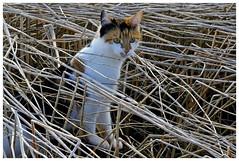 gjemt / hidden (KvikneFoto) Tags: cats katter