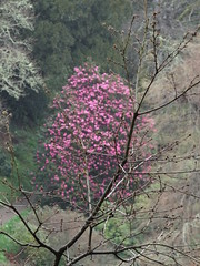 Glendurgan Garden - Mawnan Smith (westher) Tags: cornwall april nationaltrust lente 2015 southwestengland glendurgangarden 1001gardens