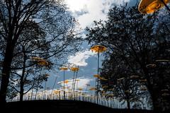 Suncatcher Field (Lens Daemmi) Tags: field deutschland feld suncatcher brandenburg buga 2015 bundesgartenschau sonnenfänger brandenburganderhavel cazadordelsol havelregion germannationalgardenshow