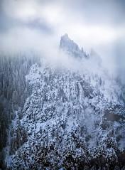 Winter Vibes (Tarun Kotz) Tags: trees winter white mist snow fog landscape yosemite yosemitenationalpark