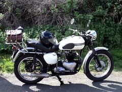 RR16-05 Triumph (drewgrantuk) Tags: triumph thunderbird 6t