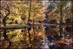 A little bit of Autumn....  DSC_4317 (BlueberryAsh) Tags: autumn lake reflection leaves nikon flickr outdoor five famous may melbourne famousfive sherbrook warmcolour nikond750 alfrednicolsmemorialgardens