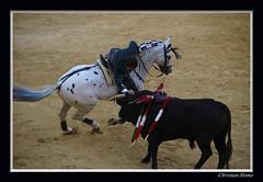 _DSC0283-2 (chris30300) Tags: france les cartagena corrida toro palavas rejon palavaslesflots flots languedocroussillonmidipyrnes languedocroussillonmidipyrn
