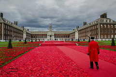 In Rememberance of those who have sacrificied .. (aquanandy) Tags: show red flower london soldier photography nikon chelsea photographer follow explore story poppy rememberance timeout drama redcarpet londonist timeoutlondon nikonflickraward nikond7000 followifulike