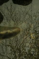 MIRROR (iigomatesanz) Tags: naturaleza tree arbol mirror espejo reflejo navarra urederra bakedao