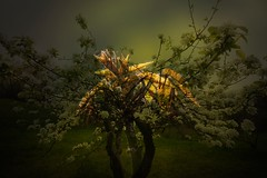 The night flight (GP Camera) Tags: flowers trees alberi night lightandshadows shadows bokeh ombre textures silence fiori fusion suggestion vignetting notte lighteffects silenzio lucieombre allaperto trame trascendental digitalprocessing fusione tamron1118mm nikond80 effettidiluce suggestione elaborazionedigitale trascendentale nikonafsdx55200mmf456gvr