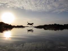 Paty? Explorando... (josmanuelvaquera) Tags: mar agua paty mascotas rocas ceuta amaneceres mareas