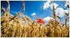 Paisajeari kolorea ematen (ainhoa.beristain) Tags: color landscape flor paisaje euskalherria navarra lorea euskal herria nafarroa paisaia kolorea bardenas reales bardeak paisajea