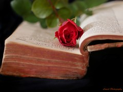 la connaissance (laurek.photography) Tags: red black flower fleur rose rouge book dof bokeh livre