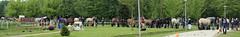 2016-05-21 PHC Duiven (146) (The Kooistra's) Tags: duiven phc dressuur hindernissen vierspan vaardigheid powerhorsecompetition enkelspan dubbelspan trekpaardproeven spiegelparcours 2122mei2016