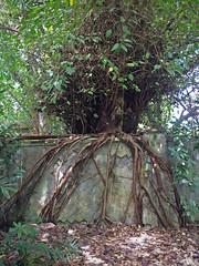 (global.local) Tags: bali building tree abandoned nature indonesia amusementpark abandonedplaces naturewins