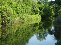 Peaceful canal reflections (pilechko) Tags: light green water reflections canal dr nj lambertville