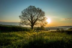 Lever de soleil  Collonge en Charolais (Ici VS Ailleurs) Tags: france tree sunrise et bourgogne loire campagne arbre charolais saone collonge leverdusoleil saoneetloire