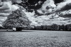 sitting in the shade (David Feuerhelm) Tags: nikkor tree clouds blackandwhite monochrome infrared wideangle serene contrast bw gloucestershire nationaltrust parkland england nikon silverefex d90