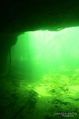 IMG_5946 (2) (SantaFeSandy) Tags: giant snapper turtle cave diving sinks lafayette blue springs state park sandrakosterphotography sandrakosterphotographycom sandykoster sandy sandra santafesandysandrakosterphotographycom sandrakoster algae green sink stevens 1 snake
