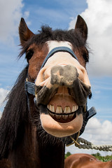 the worlds best photos of horse and teeth flickr hive mind