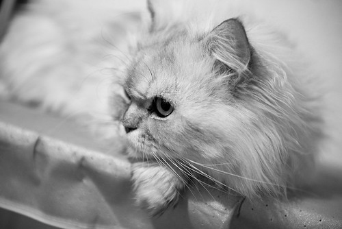 Marcello in black & white mood ©  Andrey