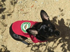 April 26, 2015 (1) (gaymay) Tags: california gay red dog love happy desert palmsprings triad ozmo minneosotawild