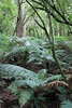 Melba Gully (mertie.) Tags: greatoceanroad melbagully victoriaaustralia greatotwaynationalpark