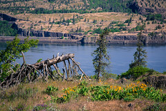 looking over the edge (~ yucatan ~) Tags: trees tree river hiking hike columbiariver gorge wildflowers columbiarivergorge balsamroot tommccallpreserve