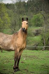 Lipowiec (AgataKnapik) Tags: horses horse nature water beautiful colours may moutain moutains lipowiec