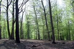 Lainzer_Tiergarten_05 (rhomboederrippel) Tags: vienna trees sun forest canon austria spring district april 13th tiergarten 2015 hietzing lainzer sx120 rhomboederrippel