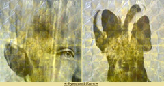 des yeux des oreilles (andrefromont/fernandomort (out for a while)) Tags: eyes diptych oeil yeux meditation diptyque mditation fernandomort andrfromont andrefromontfernandomort littledoglaughedstories