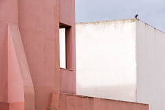 'Untitled' (Canadapt) Tags: pink white abstract building portugal window wall graphic pigeon lisbon alfama canadapt