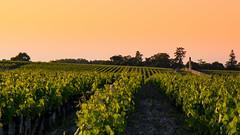 Cloture en vignes (JLpictsArt's) Tags: de soleil vin vignes vignoble couche