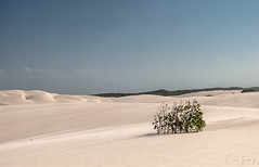 Lenis Maranhenses - dunes/dryness - Maranho/Brazil (Enio Godoy - www.picturecumlux.com.br) Tags: travel brazil texture textura brasil areia dunes journey viagem vacations maranho dunas barreirinhas soluis dryness lenoismaranhenses g15 aridez niksoftware viveza2 cannong15
