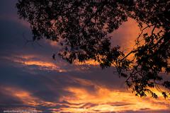 Sky On Fire (andyschwarzphotography) Tags: colour sunrise fire australia melbourne gumtree skyonfire cloudsstormssunsetssunrises