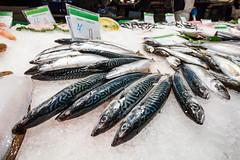 Atlantic Mackerel (dandi723) Tags: barcelona travel food fish ice animal canon eos rebel mackerel la spain europe market fresh atlantic catalunya 1022mm boqueria 550d t2i eos550d